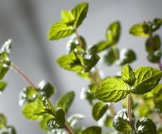 Uses for Dried Mint Leaves