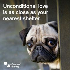 Take your pick among the beautiful animals available at your local shelter! Shelter Dogs, Animal Shelter, Rescue Dogs, Shelters, Pugs, Pug Puppies, Chihuahua Dogs, Pug Love, I Love Dogs