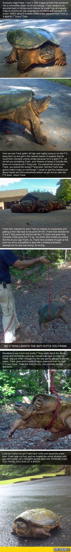 Meet Frank The Turtle