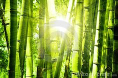 Bamboo Forest - Download From Over 26 Million High Quality Stock Photos, Images, Vectors. Sign up for FREE today. Image: 18671222