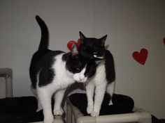 Checker (left) http://blindcatrescue.com/checker.htm  &  Jake (right) http://blindcatrescue.com/jake.htm