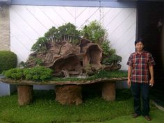 Bonsai Eve DeVinney:  Well I guess it's so, but I thought Bonsai Trees were to be small.  This is huge!