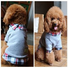 [US$8.59] Winter Pet Cat Dog Hoodies Coat Puppy Dog POLO Cotton False Two-piece Clothing #winter #hoodies #coat #puppy #polo #cotton #false #twopiece #clothing