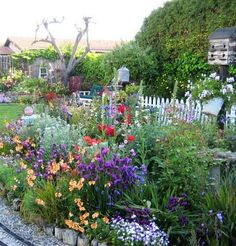 Color in the cottage garden.