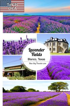 Stroll the Blanco lavender fields and be immersed in fields of purple this central Texas town.