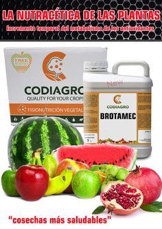 Brotamec incrementa temporalmente el metabolismo secundario, del que depende la autoprotección de las plantas y la síntesis de antioxidantes naturales.