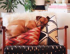 Sunday Nap #pillowtopmattress #sitswhereverhepleases