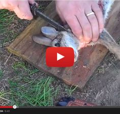 How to Skin a Rabbit - Survival First