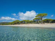 La plage de Palombaggia à Porto-Vecchio