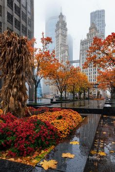 Cold fall morning in downtown Chicago 🌬❄️ Chicago Photography, Autumn Photography, Autumn Aesthetic, City Aesthetic, Chicago Pictures, Autumn Scenes, Nyc, Amazing Buildings, Chicago Illinois