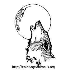 Risultati immagini per immagini lupi da disegnare