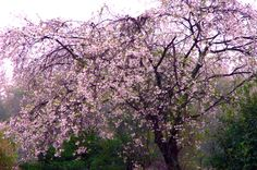 2015/4/5 三重県四日市市川島町  PENTAX K30