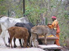 Rishikesh sadhu pad