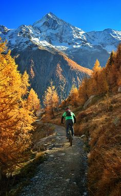 Mountain biking in the yellow larch trees in the Lötschental, Valais Switzerland Larch Tree, Places In Switzerland, Tree Line, Swiss Alps, Secret Places, Mountain Biking, Landscape Paintings, Paths, Beautiful Places