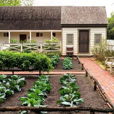 #kitchengardengoals #colonialwilliamsburg