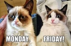 Who agrees with #GrumpyCat?  What does a normal #Friday look like for you; going out or staying in? #weekend