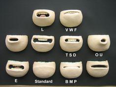 Lip-sync+mouth+parts,_213.jpeg (1024×768)