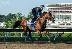 #AmericanPharoah galloping the @MonmouthPark oval & shining like a new penny. @ABRLive @jazz1284 @jazz3162 #Haskell