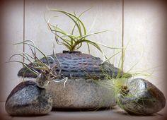 Tillandsia and naked raku Naked, Planter Pots