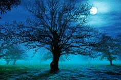 tree, moon, snow