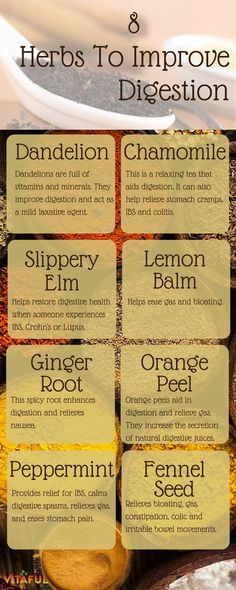 8 Herbs To Naturally Improve Digestion | Gut Healthy | Holistic | Natural Remedies |