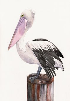 Pelican watercolor Painting  P072 print of by Splodgepodge on Etsy, $20.00
