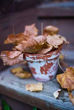 ▼ Autumn ▲