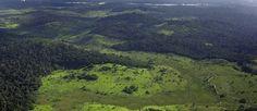 O mundo desconhecido das Savanas Amazônicas  http://controversia.com.br/3636