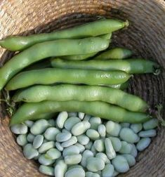 Broadbeans Super Aquadulce