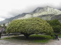 1st of May 2014 in Kotor