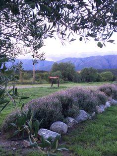 Sierras y olivos