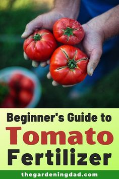 Are you looking for Tomato Fertilizer to help make your tomatoes the best?  Beginner's Guide to Tomato Fertilizer will provide you with the BEST fertilizers for your gardening need!  #tomato #fertilizer #gardening Growing Tomatoes From Seed, Growing Vegetables, Grow Tomatoes, Hydroponic Gardening, Organic Gardening, Sustainable Gardening, Gardening For Beginners, Gardening Tips, Kitchen Gardening
