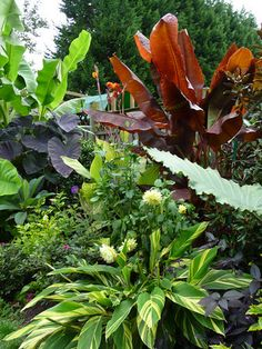 Banana, ginger and elephant ears make a lovely tropical garden in a less than tropical location!