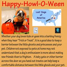 Halloween Tips Find more tips to help you find your dog at lostdogsofamerica.org