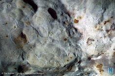 grotte de GABILLOU - animaux gravés rappelant ceux  de Lascaux