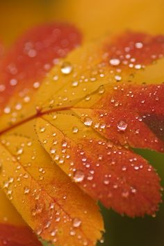 Autumn leaves with waterdrops