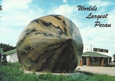 world's largest pecan - Missouri