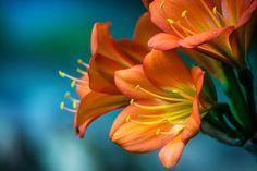Photograph Flower by Igor Sukmansky on 500px