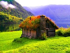 A Norwegian cottage (small cabin) with an eco friendly green roof -- or red flowering roof during parts of the summer.  Bright green grass at the mountain foothills. -DdO:) http://www.pinterest.com/DianaDeeOsborne/intriguing-architecture  Mountains are so tall that the fog clouds are below the mountain peaks.  #flowers