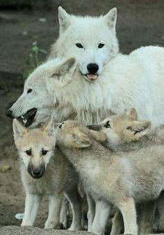 Wolves by carmen