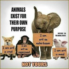 "ALL animals -- human AND nonhuman -- want to love, be loved, enjoy their freedom, & live on their own terms. BE VEGAN & end the part YOU play in upholding ""acceptable"" violence, animal cruelty, & exploitation inside cultural ""norms"" of society. Acknowledge the VICTIMS of your non-vegan habits & turn your heart towards justice rather than injustice. It's not too late to learn compassion & reverence for life. www.vegankit.com, www.bitesizevegan.com, & www.howtogovegan.org"