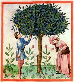 """Apples from The Tacuinum Sanitatis, a medieval handbook on healthlargely focusing on the growing & preparation of food, based on the Taqwim al‑sihha تقويم الصحة (""""Maintenance of Health""""), an 11th-century Arab medical treatise by Ibn Butlan of Baghdad. Four handsomely illustrated complete late 14th-century manuscripts of the Taccuinum, all produced in Lombardy, survive, in Vienna, Paris, Liège, and  Rome."""