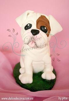 bulldog carmenb | Flickr - Photo Sharing!