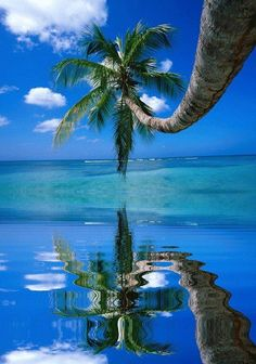 Palm tree over the sea. Hang me a hammock right underneath and I am golden.