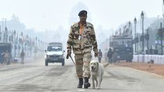 Our Canine and Horse Soldiers to be Given Special Medals for their Immense Contributions Read more--> https://goo.gl/0m20Hl