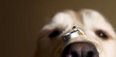 Weddings | Jeff Cooke Photography | Halifax Wedding Photographers, Nova Scotia Weddings