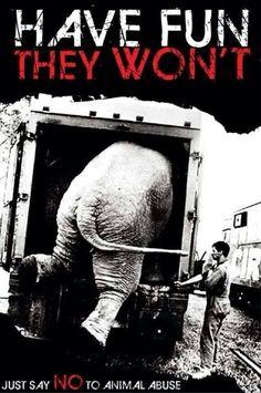 Anti-circus, elephant abuse.