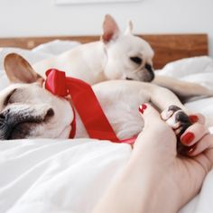 'Christmas Holidays', French Bulldogs, via Batpig & Me Tumble It.