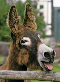 O mai A donkey I love donkeys  Damn                                                                                                                                                      More