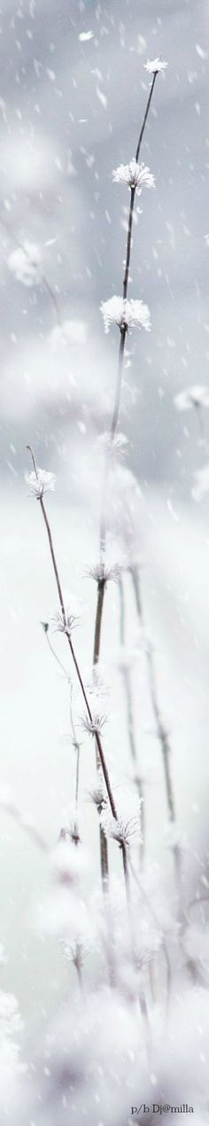 Winter and Snow Wallpaper Winter Magic, Winter Snow, Snow Valley, Beautiful Winter Scenes, Snowy Day, Black Christmas, Winter Beauty, Snow Queen, Let It Snow